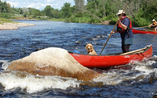 A student and a dog learning intermediate canoe poling techniques on the Miramichi River, NB with Tim Humes.
